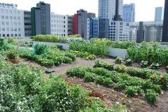 Urban Gardening in Rotterdam (Niederlande)