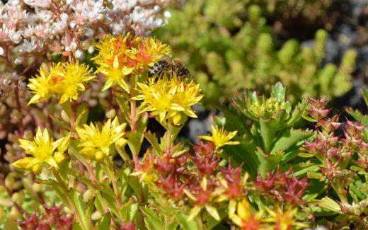 Gründach mit bunten Blumen