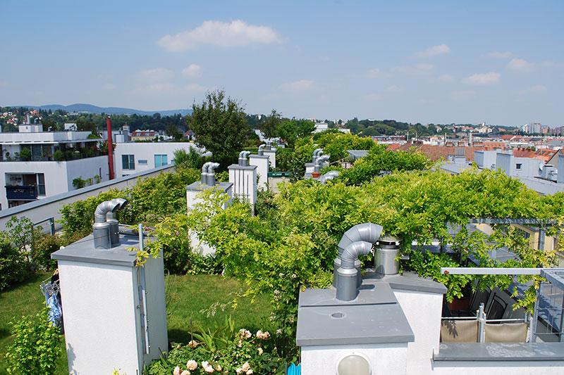 Intensive Dachbegrünung einer Wohnanlage in Wien