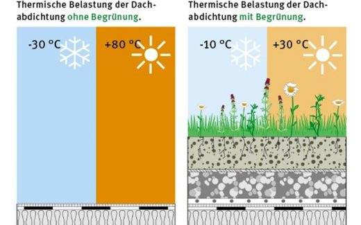 Thermische Belastung der Dachabdichtung mit und ohne Dachbegrünung.